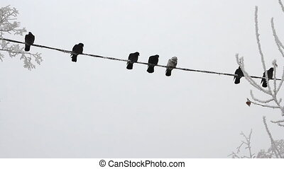 Birds on a electrical wire over sky