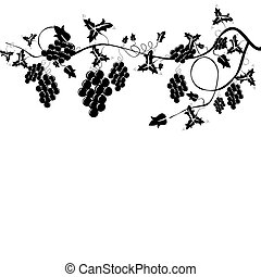 grapevine, harvest background