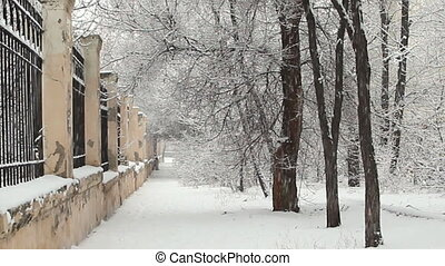 Park alley in a snowy winter day