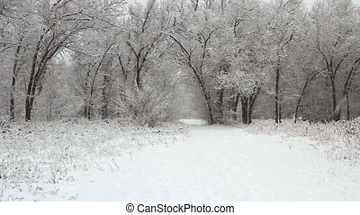 Snowfall in a winter park with snow covered trees