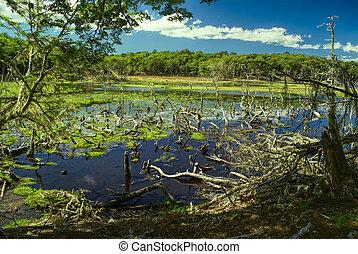 Swamps on Navarino