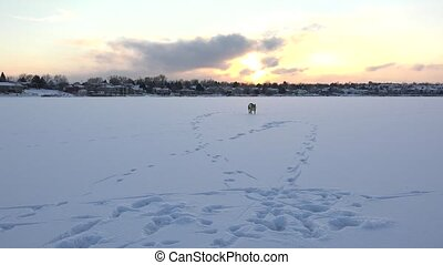 Playful Dog On Frozen Lake