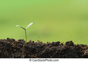 seedling plant growing from the ground ,concept for business...