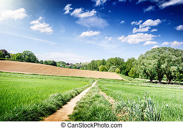 Summer landscape with countryside fields