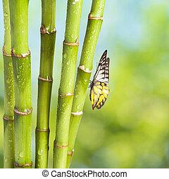 Fresh Bamboo and Bamboo leaf