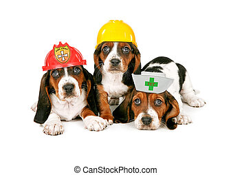 Basset Hound Puppies Wearing Work Hats - Basset Hound...