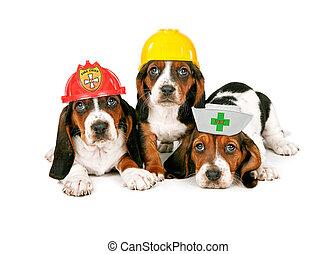 Basset Hound Puppies Wearing Work Hats - Basset Hound...