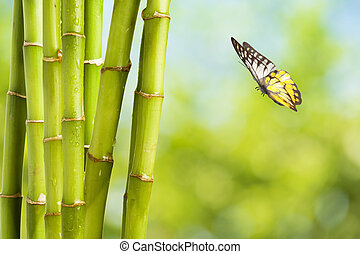 Fresh Bamboo and Bamboo leaf