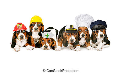 Row of Puppies in Work Hats - A line of Basset HoundPuppies...