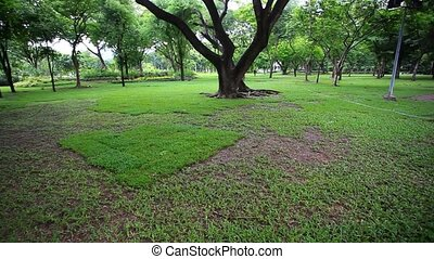 Bright green trees in the park. - Bright green trees in the...