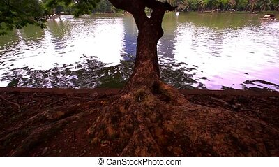 Bangkok city view. Public Garden. Big tree. - Bangkok city...