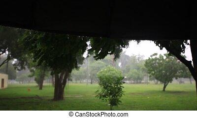 Green park in the rain. Thailand, Bangkok. HD. 1920x1080 -...