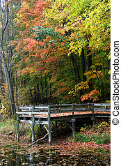 Board Walk - Board walk in a forest through colorful trees