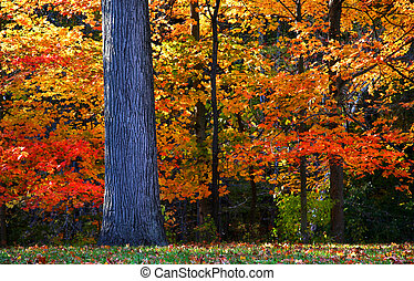 Autumn Trees - Bright colorful trees by the stream in autumn...