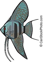 Blue Pinoy Angelfish - vector illustration of an angelfish,...