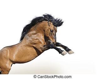 horse rears - wild horse rears