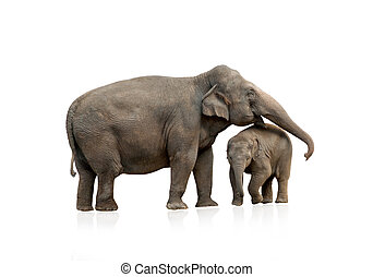 Elephant female with baby isolated
