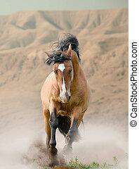 caballo, en, desierto,