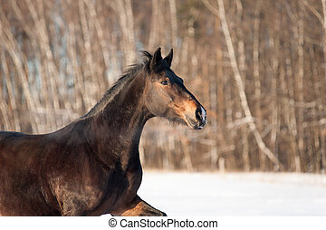 Horse in winter closeup