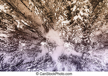 top view to huge snowy trees in winter landcape