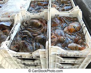 Poulpes, Italie, pieuvres, attrapé, fraîchement,  port
