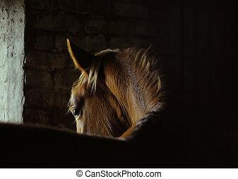 caballo, curva,