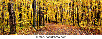 Autumn Panorama - Panoramic view of bright yellow colored...