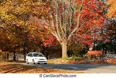 autumn time in Michigan - Bright colored trees during autumn...