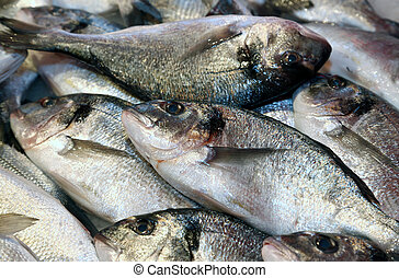bream caught fresh in the Mediterranean Sea - big bream...