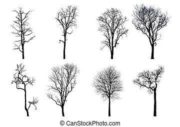 Dead tree silhouette. dry oak crown without leafs isolated...