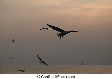 Seagull with sunset at Bang Pu beach, Thailand