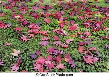 Ginkakuji Precinct Garden - Leaves of the Japanese maple...