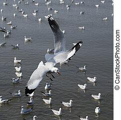 Seagull flying at Bang Pu beach, Thailand