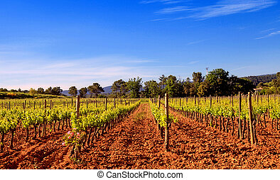 Panoramic view of a vineyard in Provence, France