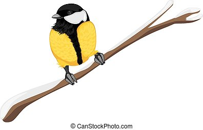 Tit sitting on a branch tree Vector illustration