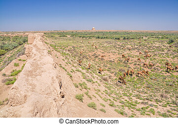 Camels in Turkmenistan - Herd of camels in desert near...
