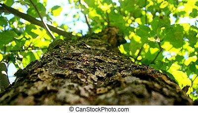 frondoso, árbol,