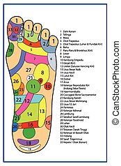 Acupuncture - Foot Scheme - scheme of foot Traditional...
