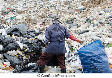 big garbage heap - scavenger on big garbage heap