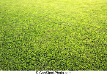 Beautiful green lawn in summer park.