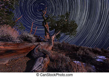 Night Exposure Star Trails of the Sky in Bristlecone Pines...