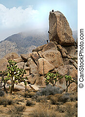 Campers Rock Climbing in Joshua Tree National Park - Campers...