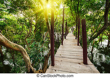 Wooden bridge in rain forest jungle of mangrove trees