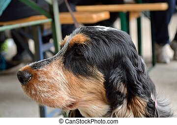 Side Dog Portrait - Nahaufnahme eines seitlichen...