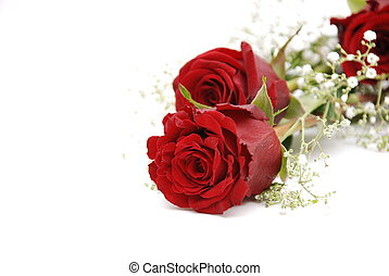 Red roses   - Red roses on white background