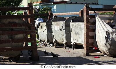 Birds and Garbage at Dumpsters - Garbage at neighborhood...