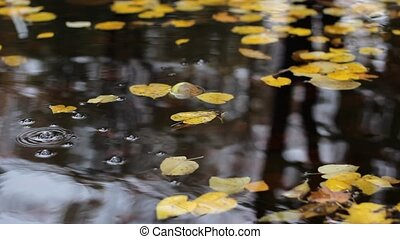 Circles Drops and Autumn Leaves - Yellowed autumn leaves...