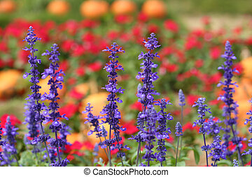 Lavender Flowers - Lavender Flower in the garden