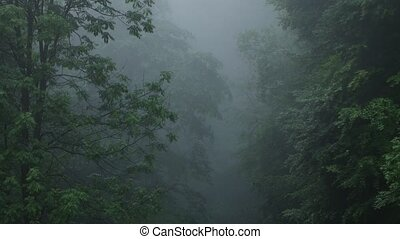Dark Fog in Forest - Thick fog over tall trees in a deep...