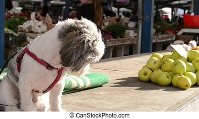 Dog and Apple Stack at Market - A little dog standing near...